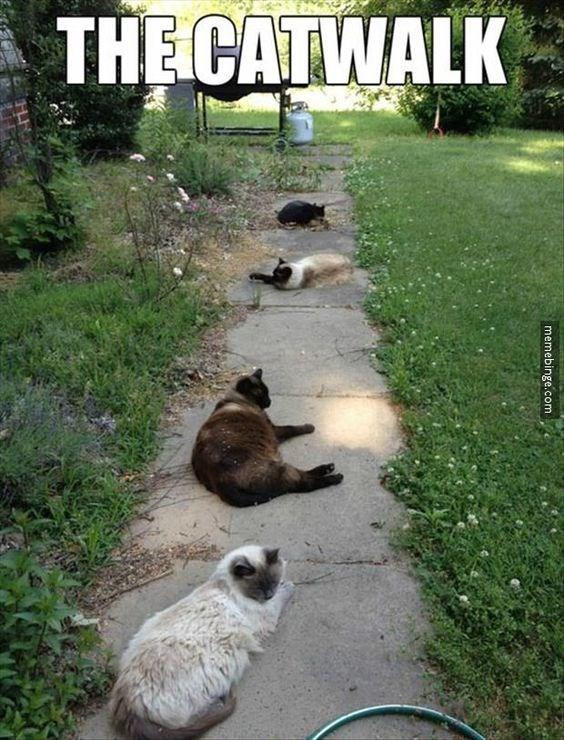 memes - Grass - THE CATWALK memebinge.com