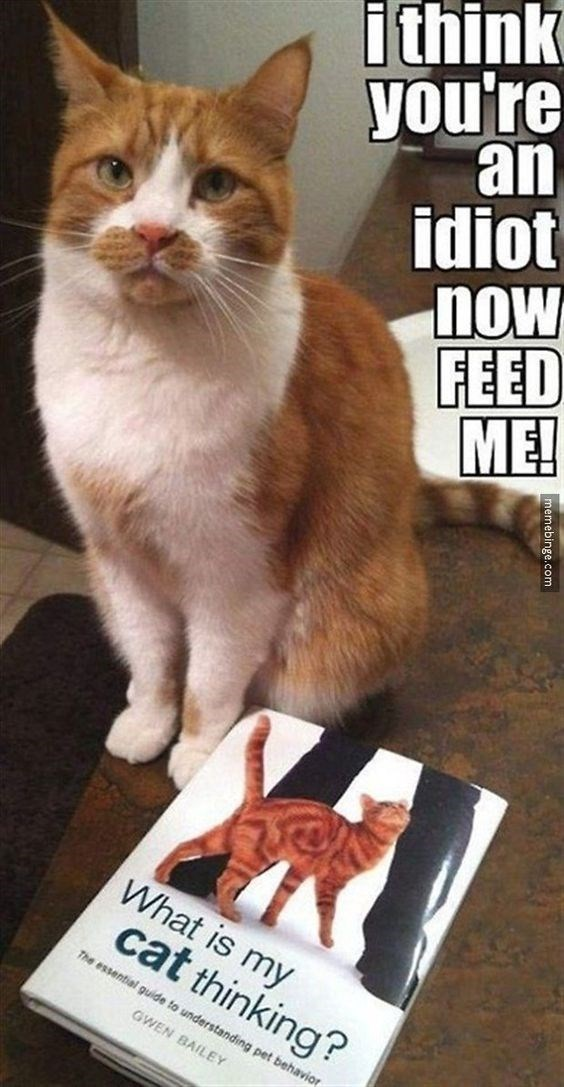 memes - Cat - ithink you're an idiot now FEED ME! What is my cat thinking? The essential guide to understanding pet behavior GWEN BAILEY emebinge.com