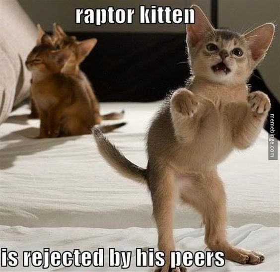 memes - Cat - raptor kitten is rejected by his neers memebinge.com