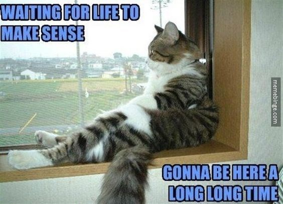 memes - Cat - WAITING FOR LIFE TO MAKESENSE GONNA BE HEREA LONG LONG TIME memebinge.com
