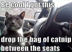 memes - Cat - Be cool Igot this drop the bag of catni between the seats m bng.com