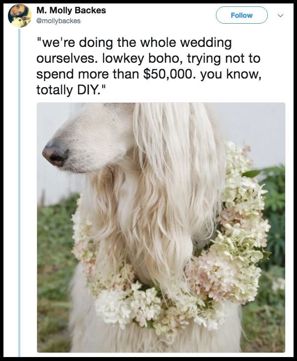 "Dog - M. Molly Backes @mollybackes Follow ""we're doing the whole wedding ourselves. lowkey boho, trying not to spend more than $50,000. you know, totally DIY."""