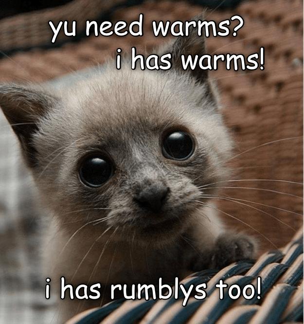 cat meme - Photo caption - yu need warms? i has warms! i has rumblysfoo!