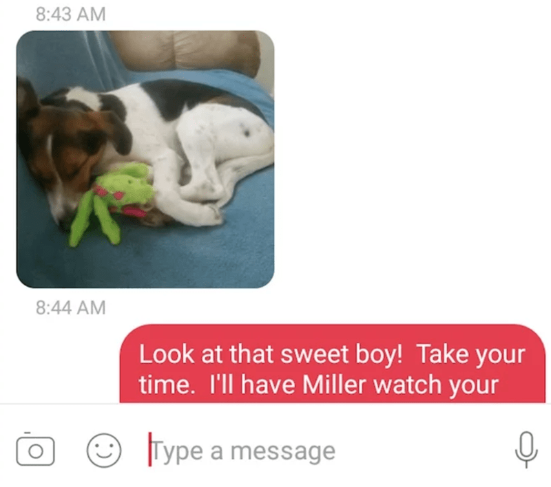 Product - 8:43 AM 8:44 AM Look at that sweet boy! Take your time. I'll have Miller watch your Type a message