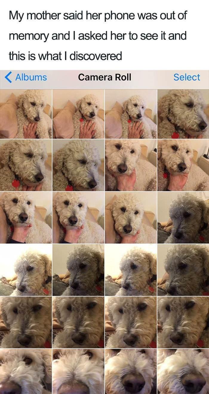 dogs cute doggo funny - 9148161792