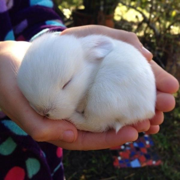 Cute bunny sleeping in the palm of a hand - looks beyond adorable - Image thanks to i8ajqlu2z and Reddit.
