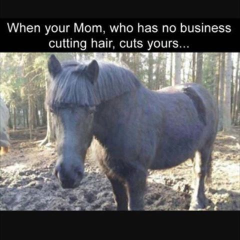 Horse - When your Mom, who has no business cutting hair, cuts yours...