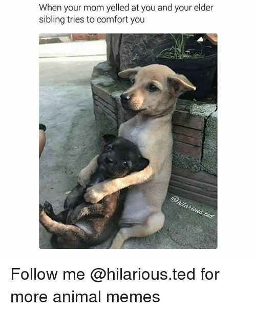 Dog - When your mom yelled at you and your elder sibling tries to comfort you @hilaricus ted Follow me @hilarious.ted for more animal memes