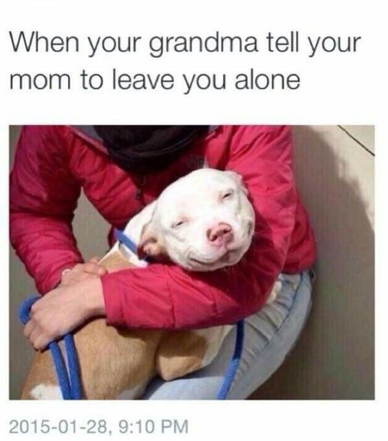 Dog breed - When your grandma tell your mom to leave you alone 2015-01-28, 9:10 PM