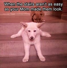 Mammal - When the stairs aren't as easy as your Mom made them look.
