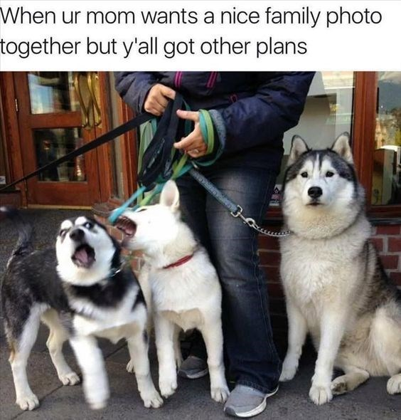Dog - When ur mom wants a nice family photo together but y'all got other plans