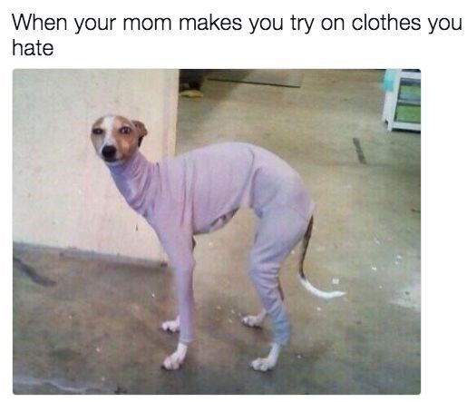 Dog - When your mom makes you try on clothes you hate