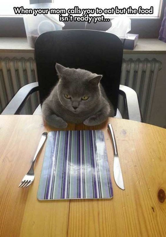 Cat - When your mom callbyou to cat but the food fisn't ready yet.