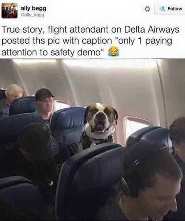 """Photo caption - ally begg ally begg Follow True story, flight attendant on Delta Airways posted ths pic with caption """"only 1 paying attention to safety demo"""""""