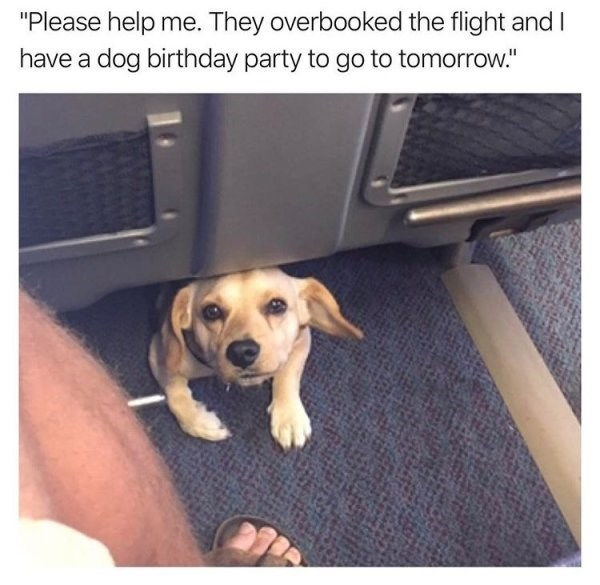 """Dog - """"Please help me. They overbooked the flight and I have a dog birthday party to go to tomorrow."""""""