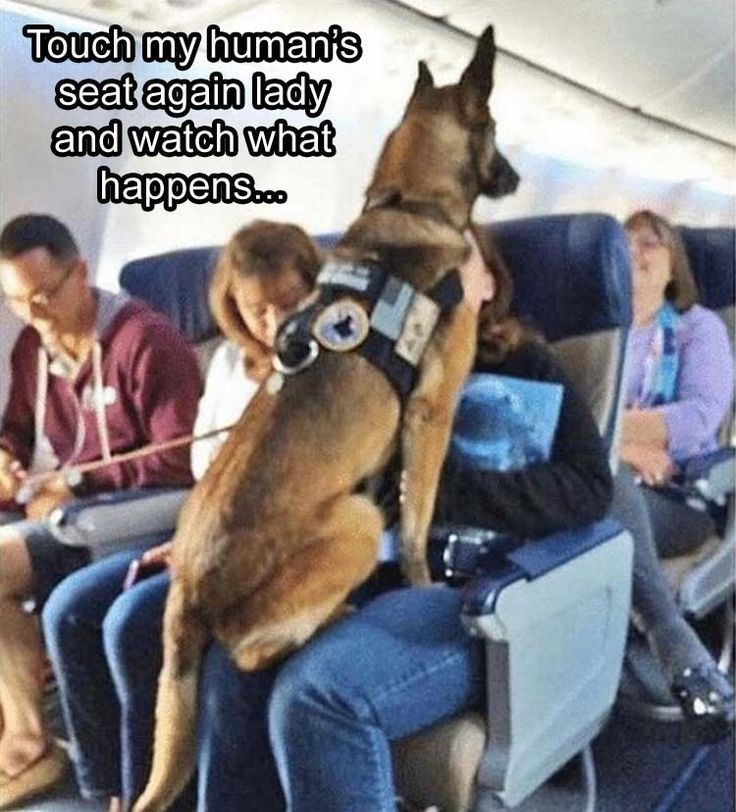 Mammal - Touch my human's seat again lady and watch what happens.c..