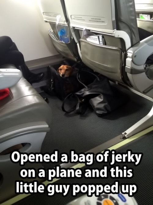 Vehicle - Opened a bag of jerky on a plane and this little guy poppedup 06