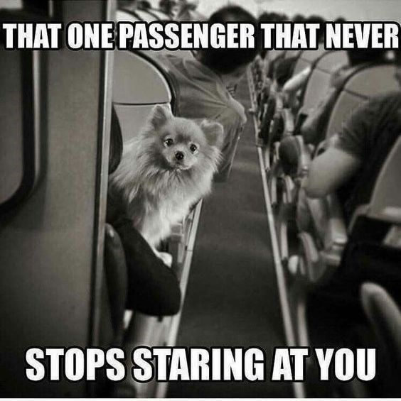 Photo caption - THAT ONE PASSENGER THAT NEVER STOPS STARING AT YOU