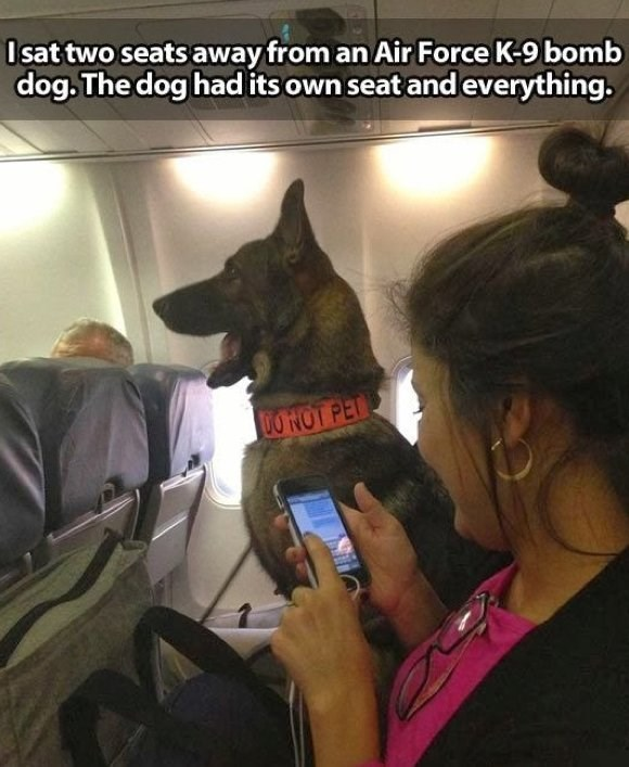 Canidae - Isat two seats away from an Air Force K-9 bomb dog.The dog had its own seat and everything. 0O NOT PET