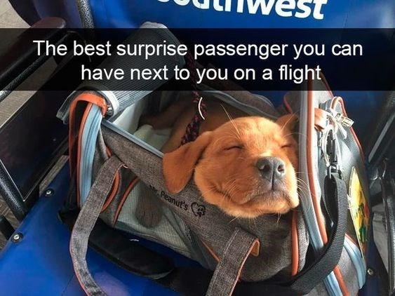 Canidae - The best surprise passenger you can have next to you on a flight Peanut's