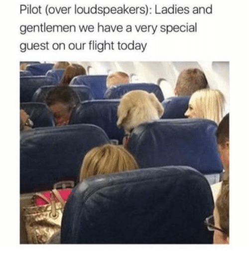People - Pilot (over loudspeakers): Ladies and gentlemen we have a very special guest on our flight today