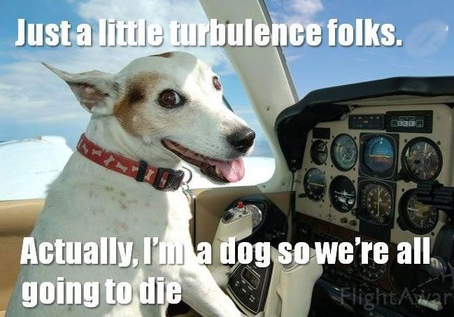 Canidae - Just a little turbulence folks. 900 Actually, I' a dog so we're all, going to die SElightAar