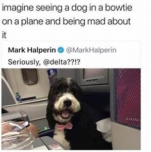 Dog - imagine seeing a dog in a bowtie on a plane and being mad about it Mark Halperin @MarkHalperin Seriously, @delta??!?