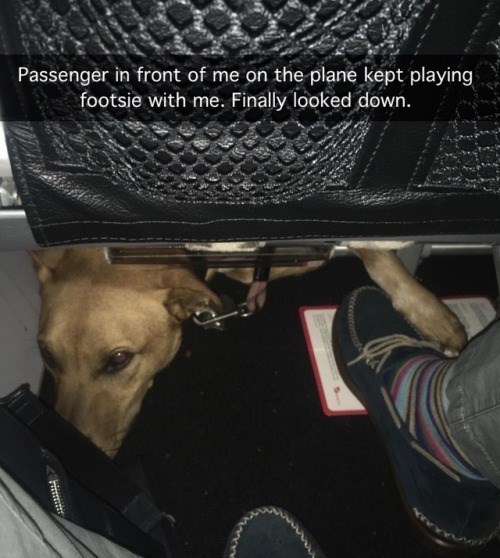 Dog - Passenger in front of me on the plane kept playing footsie with me. Finally looked down