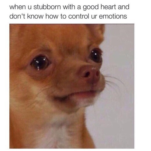 Dog - when u stubborn with a good heart and don't know how to control ur emotions