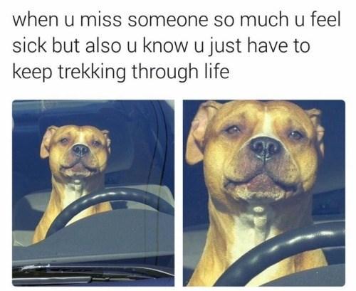 Dog - when u miss someone so much u feel sick but also u know u just have to keep trekking through life