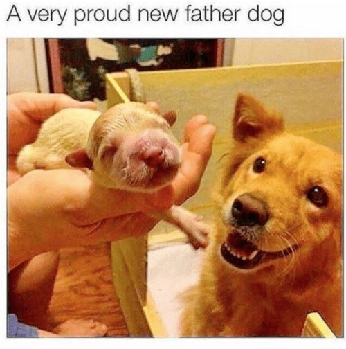 Canidae - A very proud new father dog