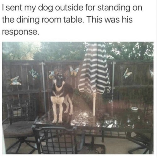 Text - I sent my dog outside for standing on the dining room table. This was his response.
