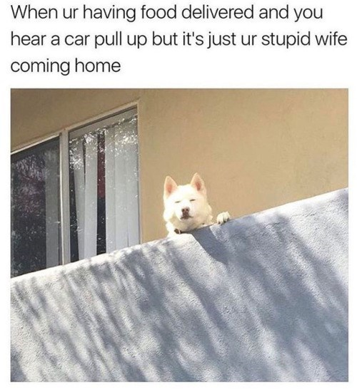 French bulldog - When ur having food delivered and you hear a car pull up but it's just ur stupid wife coming home