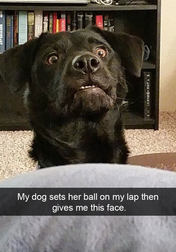 Dog - My dog sets her ball on my lap then me this face. gives AME at-t J.A. AM
