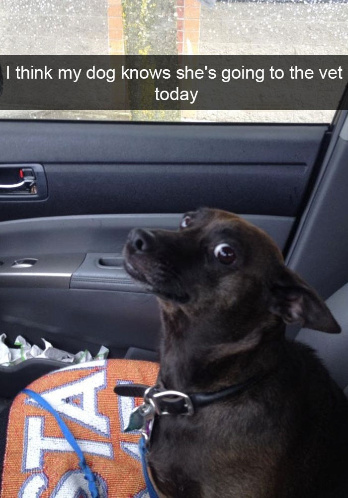 Dog - think my dog knows she's going to the vet today
