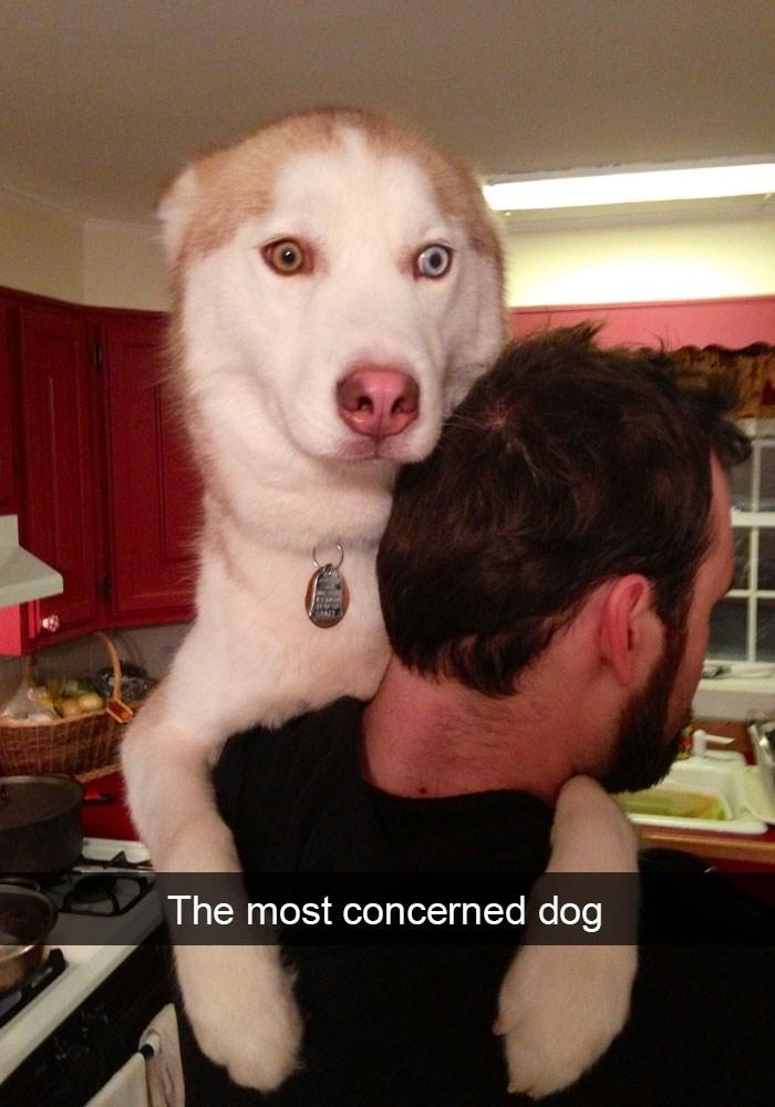 Dog - The most concerned dog