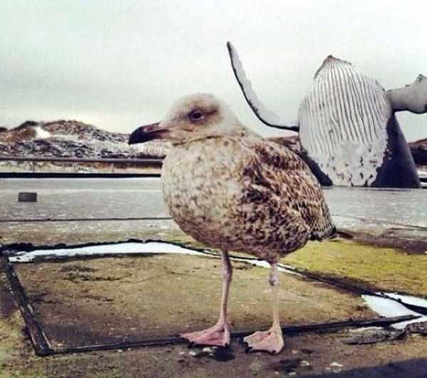 animal photobombs - Bird