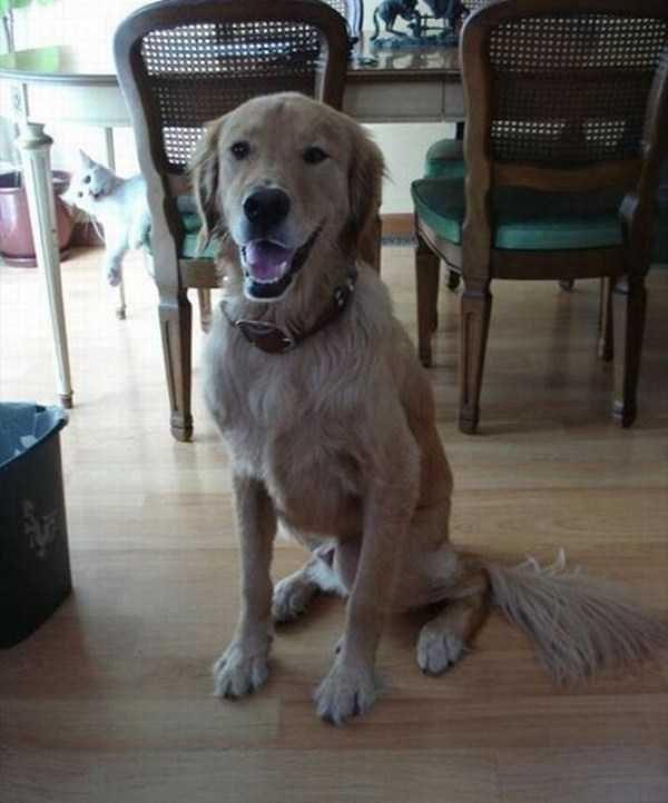 animal photobombs - Dog