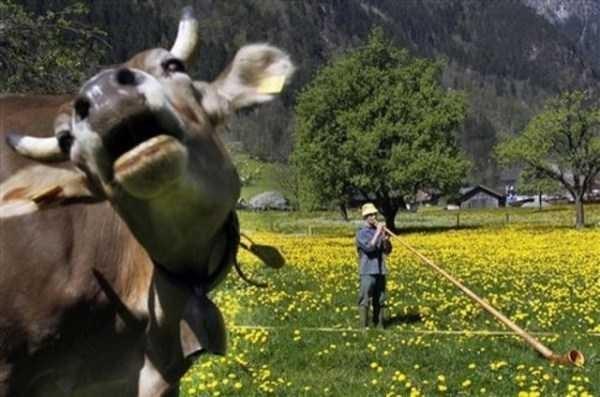 animal photobombs - Working animal