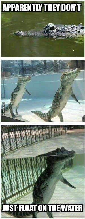animal meme - Reptile - APPARENTLY THEY DON'T JUST FLOAT ON THE WATER WA 9B AG.COM