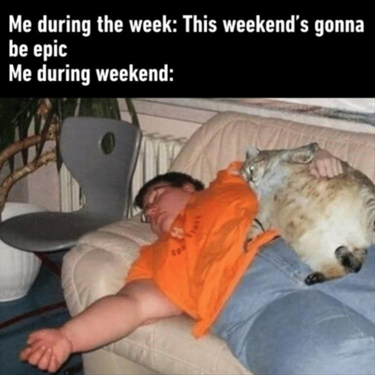 animal meme - Photo caption - Me during the week: This weekend's gonna be epic Me during weekend: