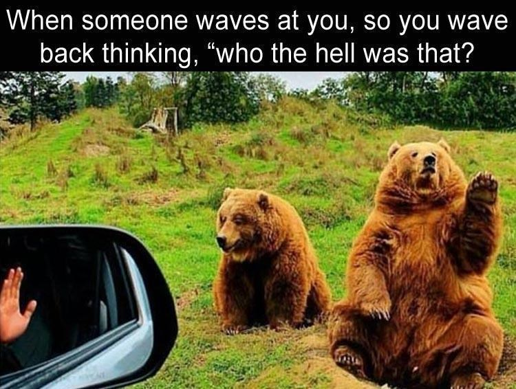"animal meme - Brown bear - When someone waves at you, so you wave back thinking, ""who the hell was that?"