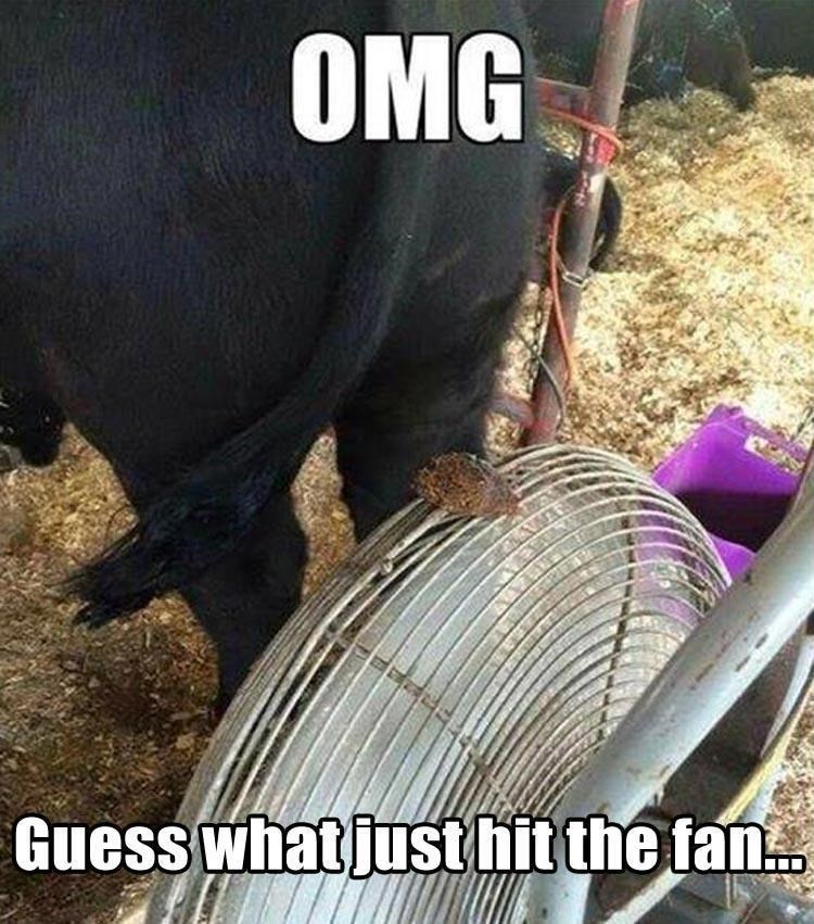 animal meme - Bovine - OMG Guess what justhit the fan