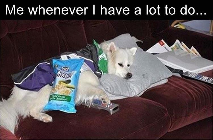 animal meme - Canidae - Me whenever I have a lot to do... CROOCANT