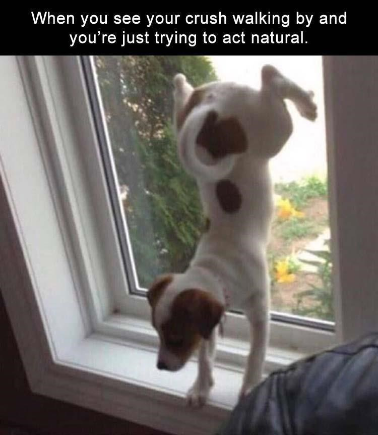 animal meme - Dog - When you see your crush walking by and you're just trying to act natural.