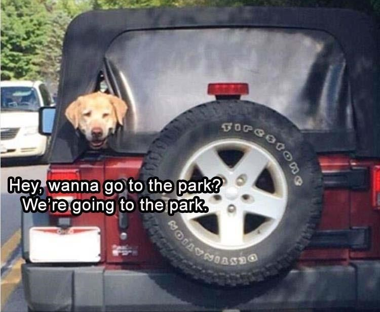 animal meme - Tire - Hey,wanna go to the park? We're going to the park,