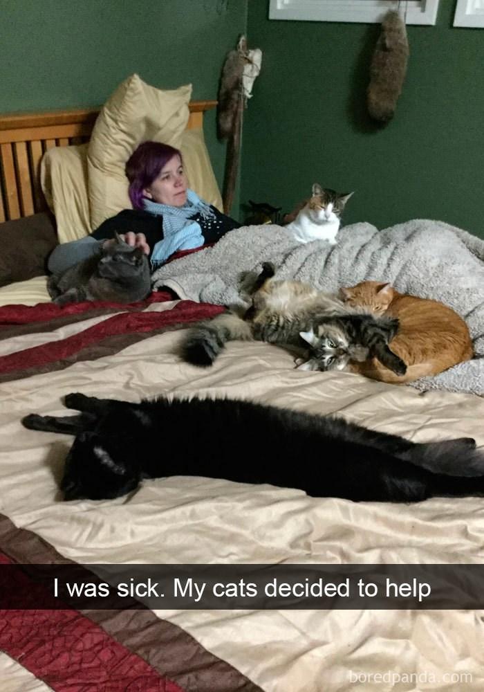 Nap - I was sick. My cats decided to help boredpanda.com