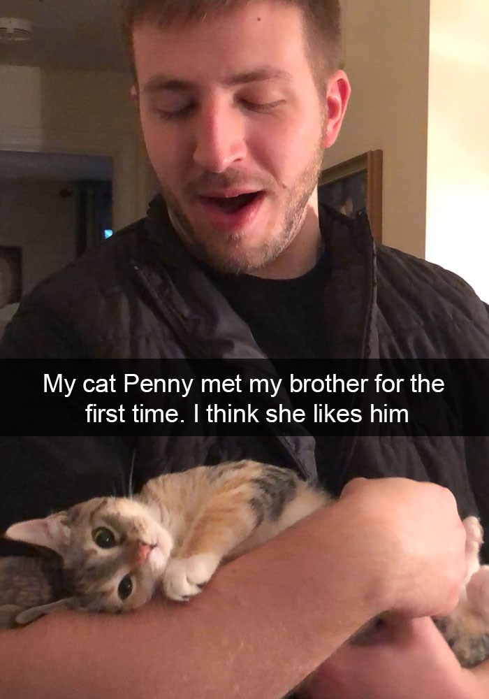 Cat - My cat Penny met my brother for the first time. I think she likes him