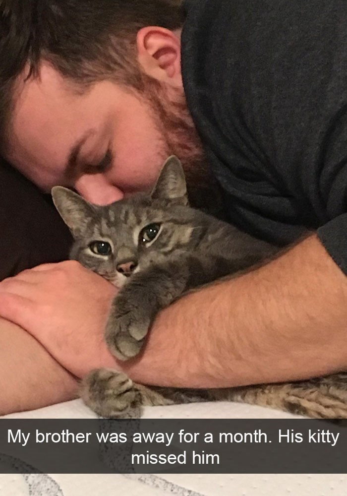 Cat - My brother was away for a month. His kitty missed him Co
