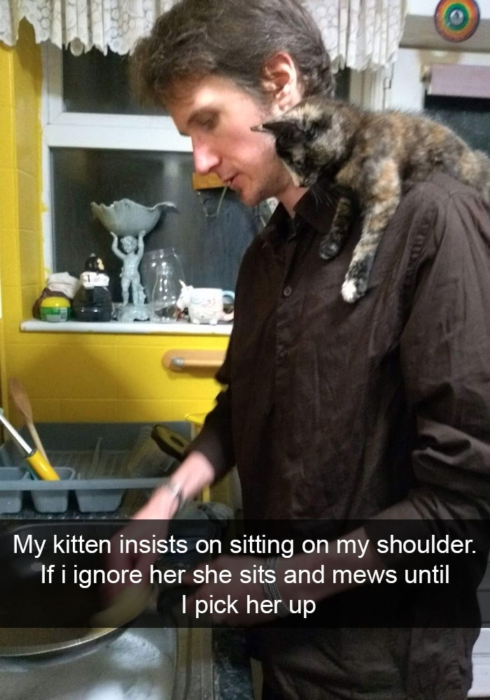 Photo caption - My kitten insists on sitting on my shoulder. If i ignore her she sits and mews until I pick her up
